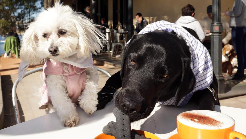 Online dating for dogs in Sydney